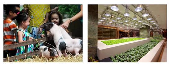农贸市场设计—一鸿市场研究中心